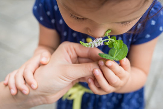 Genes on the move help nose make sense of scents