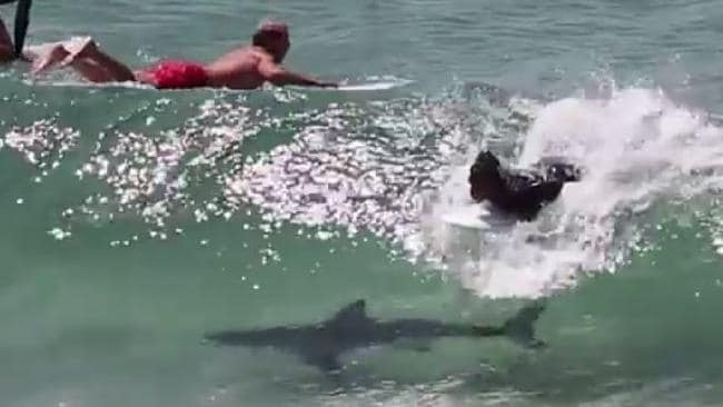 Shark attacks surfer near Byron Bay