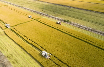 China reaping harvest of agricultural R&D