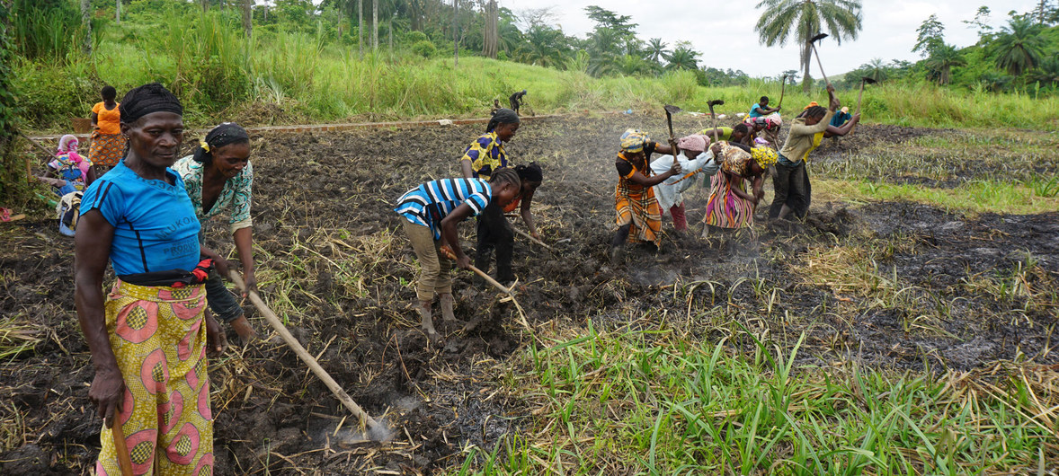 CLIMATE CHANGE FOCUS: Congo Prospers from Environmental Protection